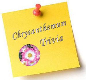 11-chrysanthemumtrivia